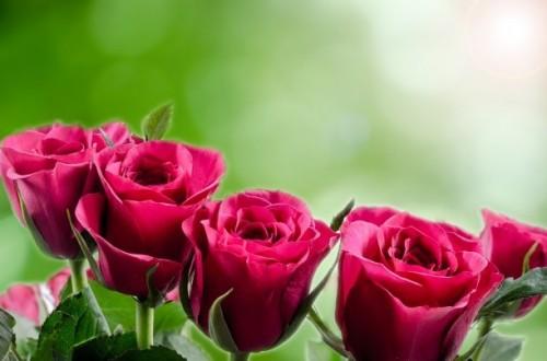 バレンタインと愛の告白|心温まるお話