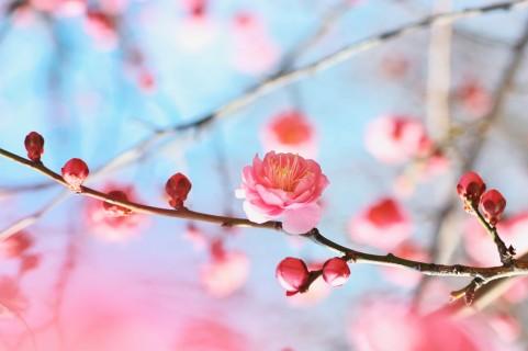 ひな祭りは「桃の節句」なのに、なぜ休日じゃないの?