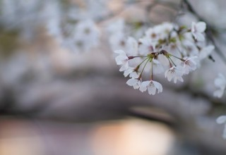15.1.25花見はカフェで♪|お花見の楽しみ方2