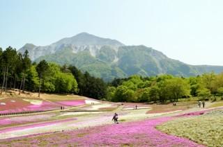 秩父羊山公園の芝桜は5月上旬までが見ごろ