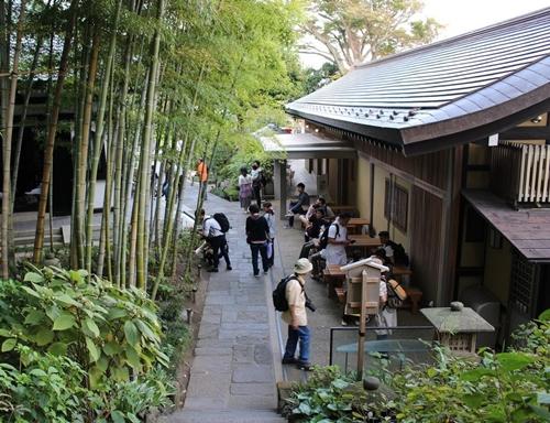 鎌倉の長谷寺の魔力は紅葉にもあらわる