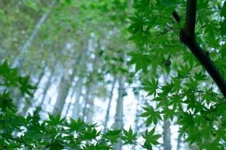 鎌倉の竹林で有名な寺カフェで心ささやく
